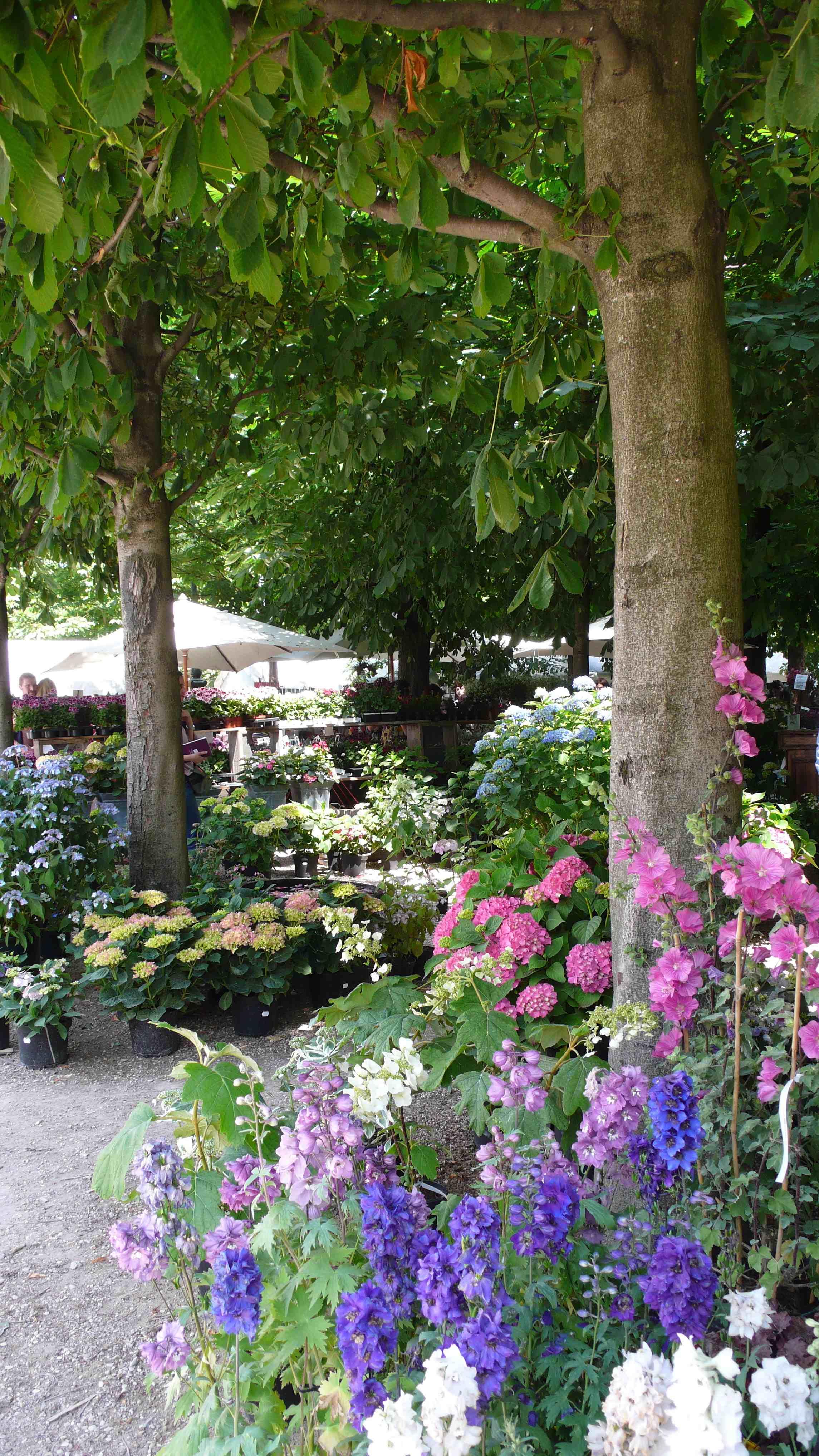 Jardins jardin aux tuileries a landscape lover 39 s blog for Aux jardins