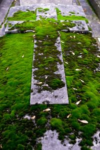 moss-covered tomb