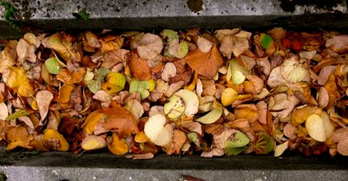 fallen leaves between graves